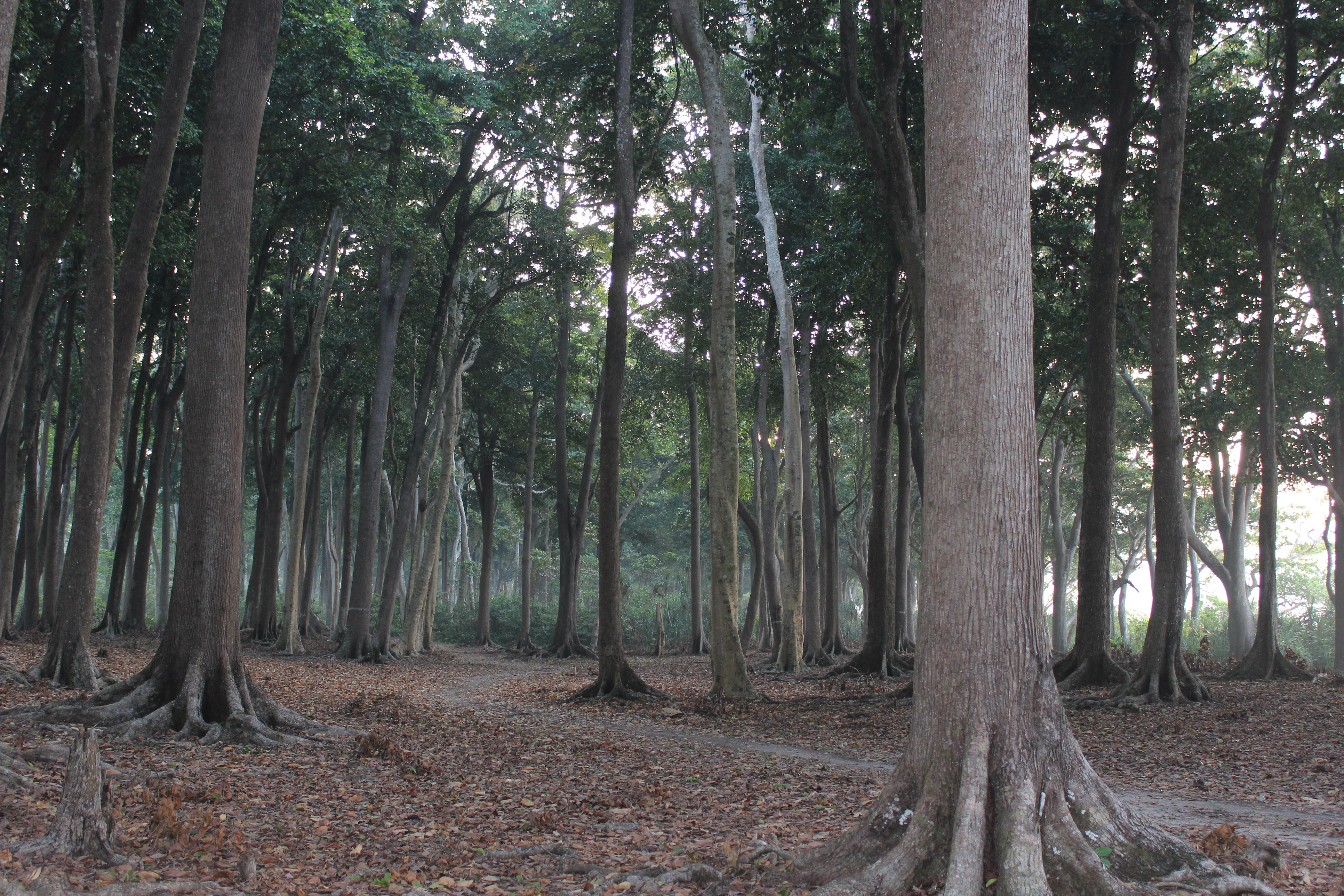 Dense forest around the resort