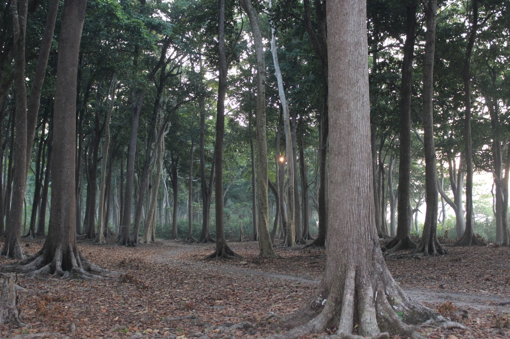Sun rising through the forest