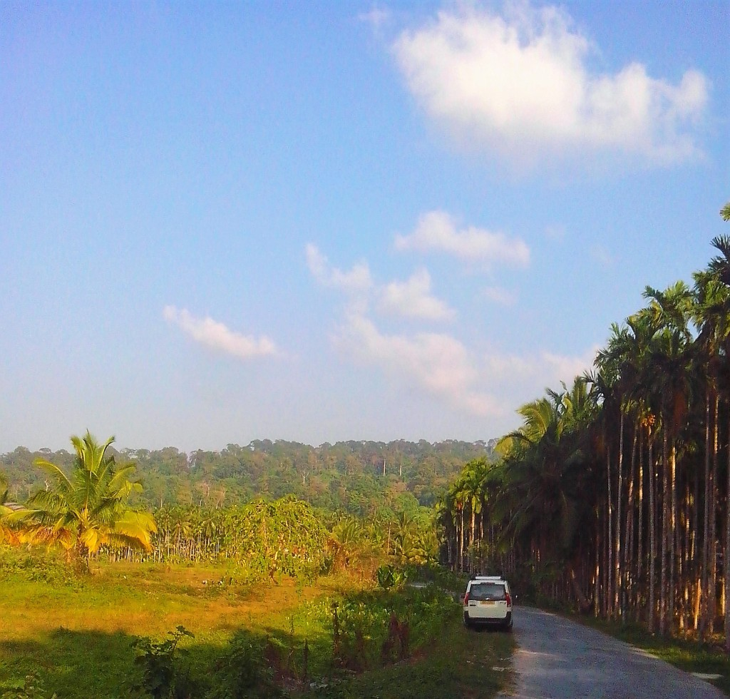 Road to the resort